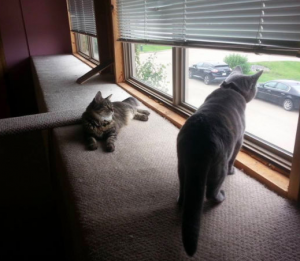 Caribou has spotted a bird, while someone tries to befriend her.